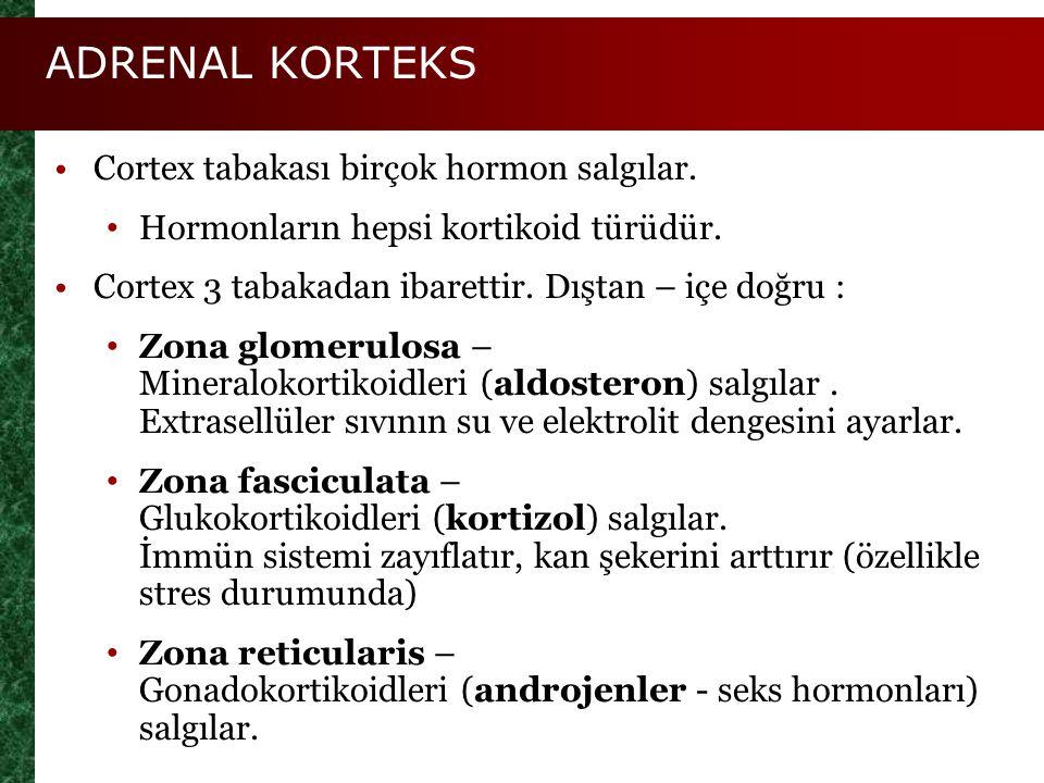 ADRENAL KORTEKS Cortex tabakası birçok hormon salgılar.