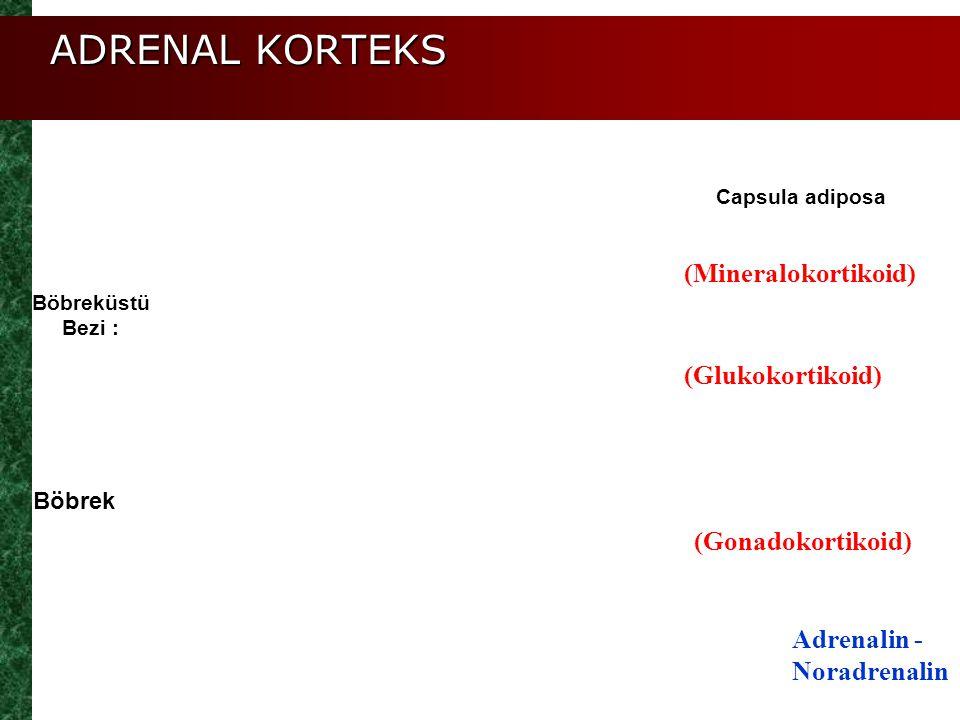 ADRENAL KORTEKS (Mineralokortikoid) (Glukokortikoid) (Gonadokortikoid)