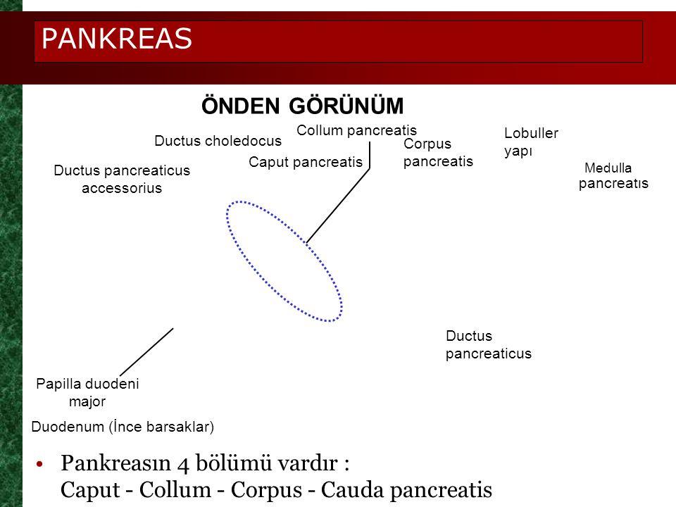 Ductus pancreaticus accessorius