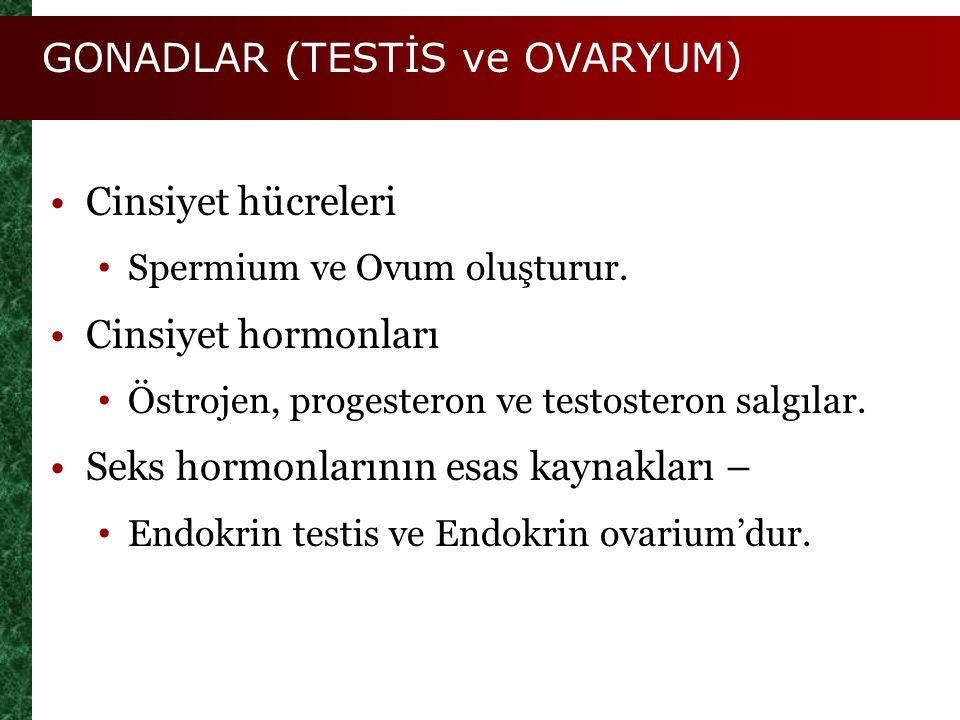GONADLAR (TESTİS ve OVARYUM)