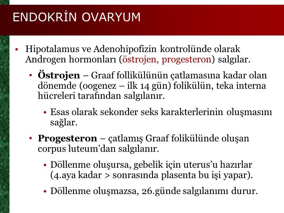 ENDOKRİN OVARYUM Hipotalamus ve Adenohipofizin kontrolünde olarak Androgen hormonları (östrojen, progesteron) salgılar.