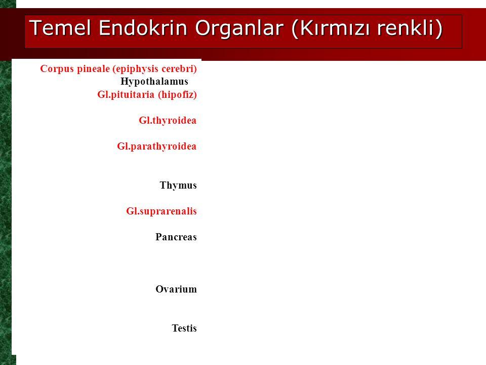 Temel Endokrin Organlar (Kırmızı renkli)