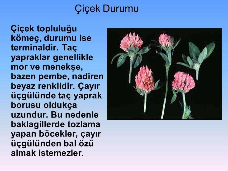 Çiçek Durumu