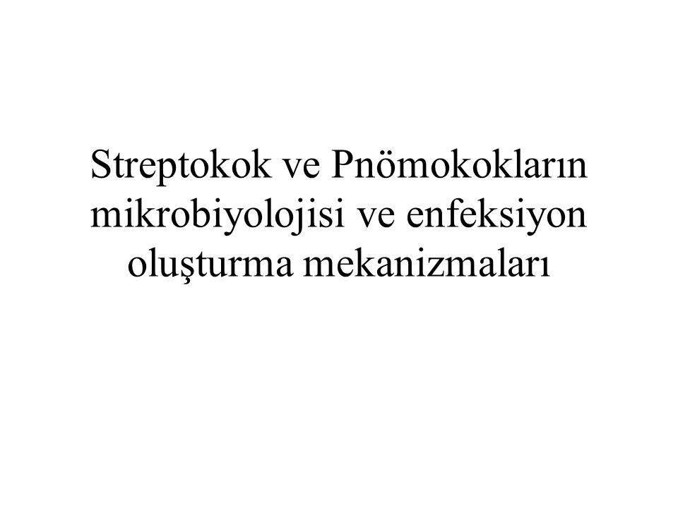 Streptokok ve Pnömokokların mikrobiyolojisi ve enfeksiyon oluşturma mekanizmaları