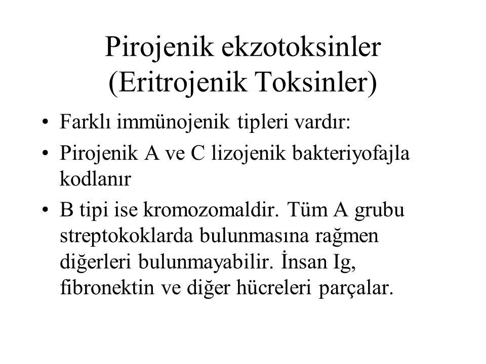 Pirojenik ekzotoksinler (Eritrojenik Toksinler)