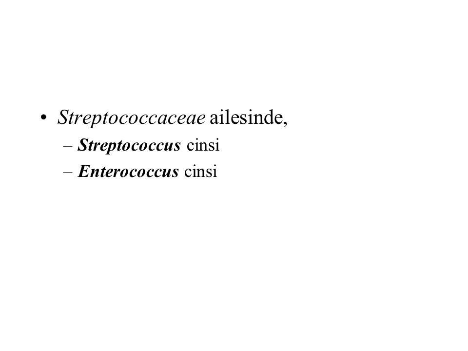 Streptococcaceae ailesinde,