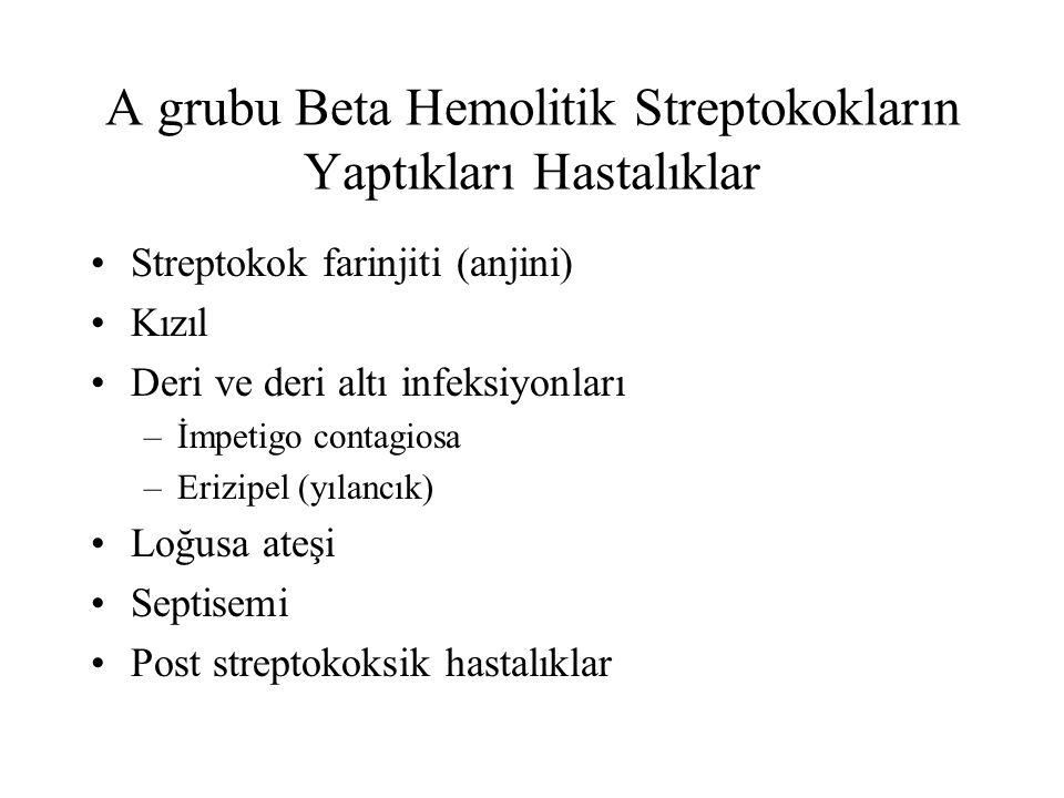 A grubu Beta Hemolitik Streptokokların Yaptıkları Hastalıklar