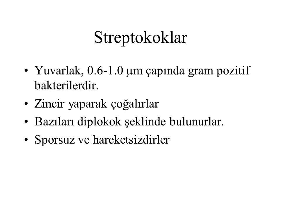 Streptokoklar Yuvarlak, 0.6-1.0 m çapında gram pozitif bakterilerdir.