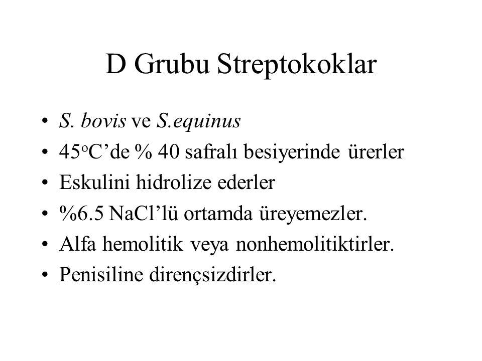 D Grubu Streptokoklar S. bovis ve S.equinus