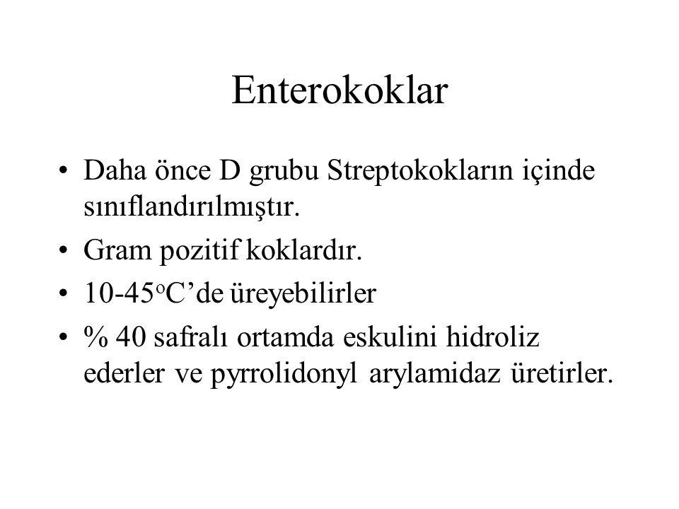Enterokoklar Daha önce D grubu Streptokokların içinde sınıflandırılmıştır. Gram pozitif koklardır.