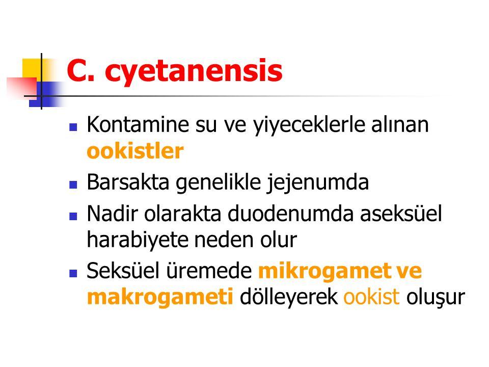 C. cyetanensis Kontamine su ve yiyeceklerle alınan ookistler