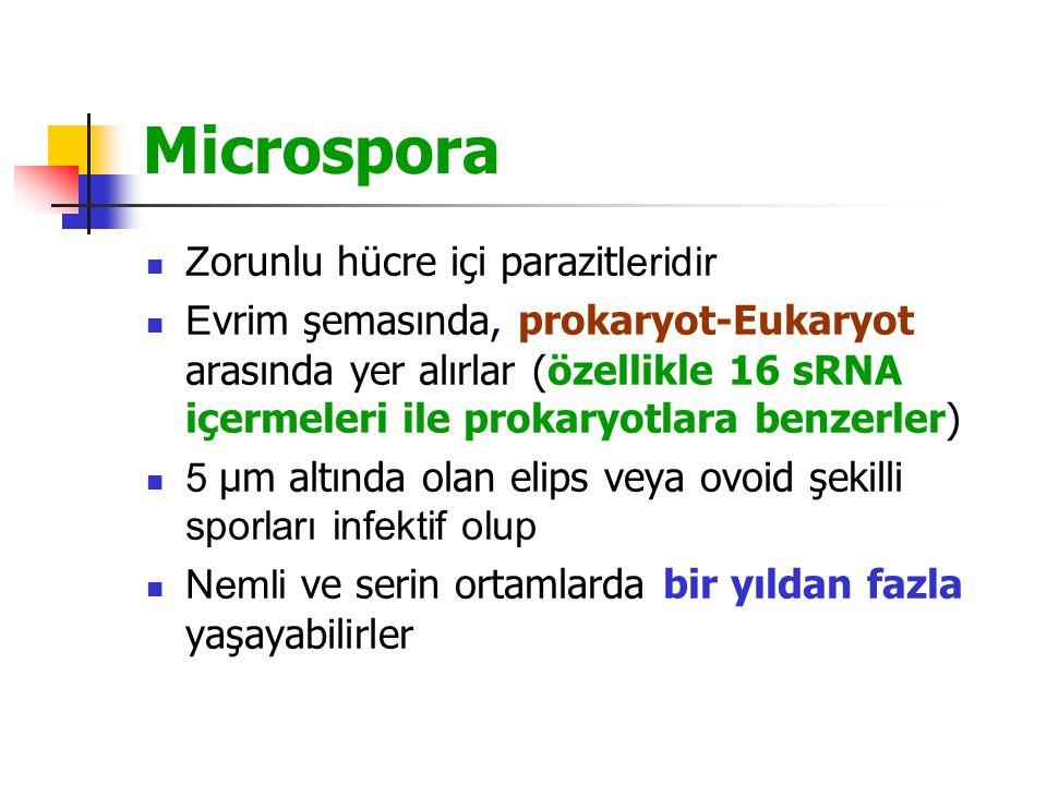Microspora Zorunlu hücre içi parazitleridir