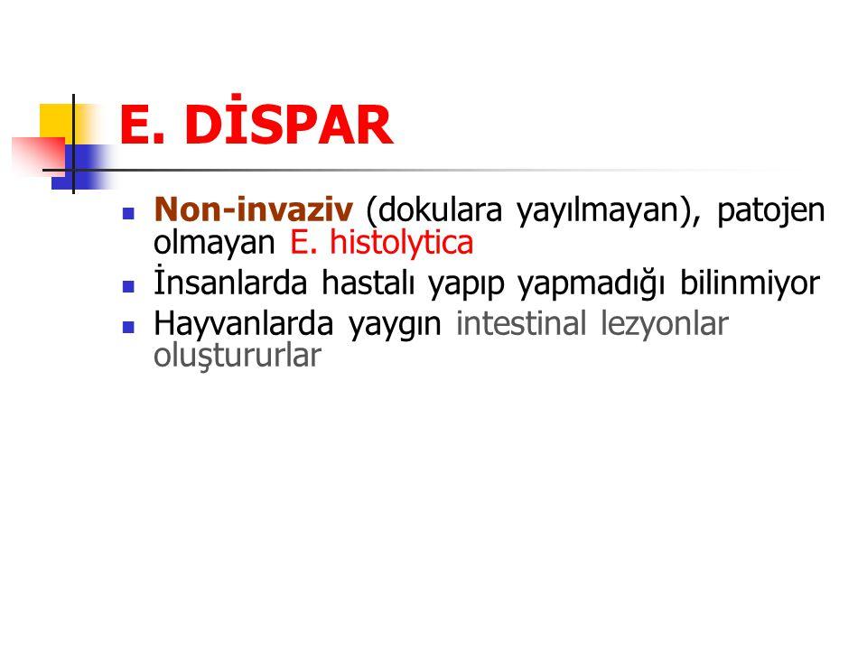 E. DİSPAR Non-invaziv (dokulara yayılmayan), patojen olmayan E. histolytica. İnsanlarda hastalı yapıp yapmadığı bilinmiyor.