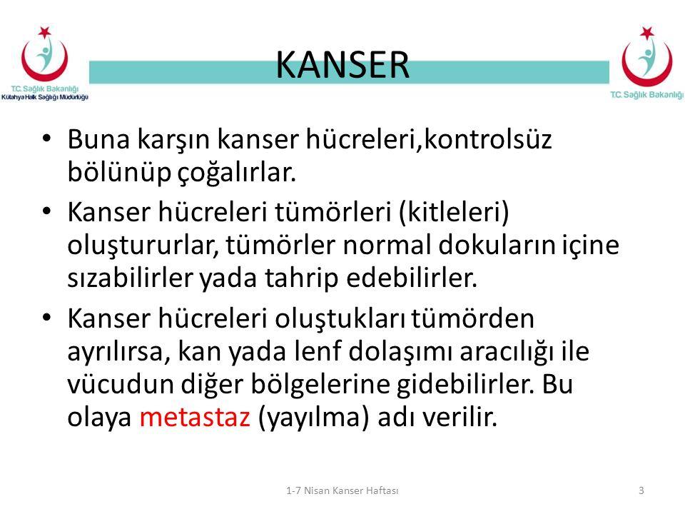 KANSER Buna karşın kanser hücreleri,kontrolsüz bölünüp çoğalırlar.