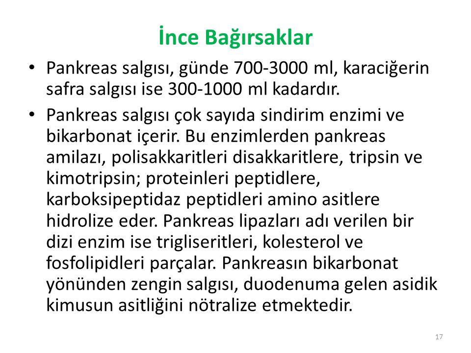 İnce Bağırsaklar Pankreas salgısı, günde 700-3000 ml, karaciğerin safra salgısı ise 300-1000 ml kadardır.