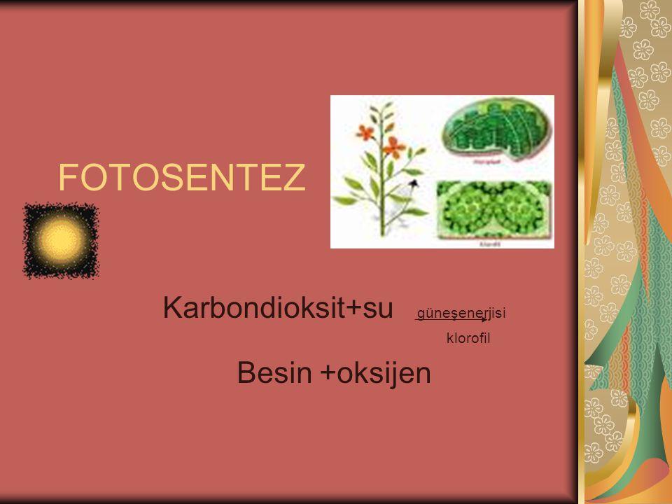 Karbondioksit+su güneşenerjisi klorofil Besin +oksijen