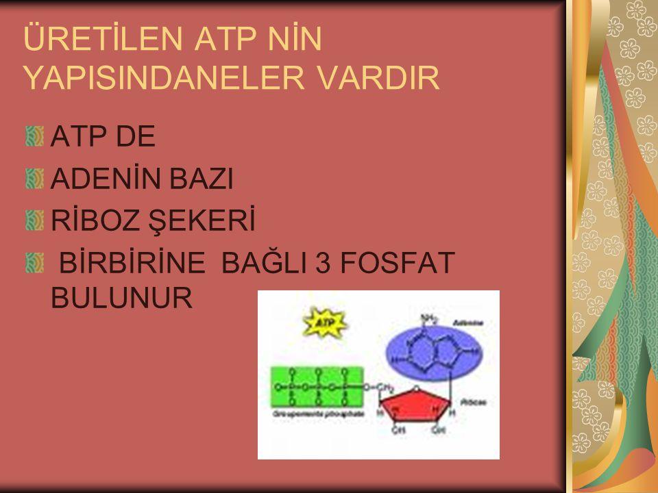 ÜRETİLEN ATP NİN YAPISINDANELER VARDIR