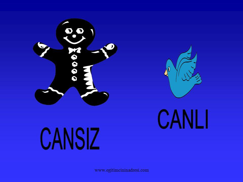 CANLI CANSIZ www.egitimcininadresi.com