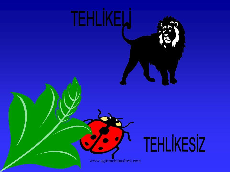 TEHLİKELİ TEHLİKESİZ www.egitimcininadresi.com