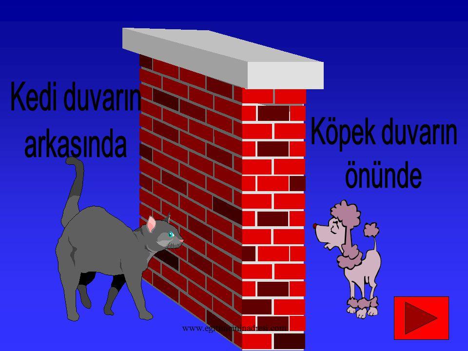Kedi duvarın arkasında Köpek duvarın önünde www.egitimcininadresi.com