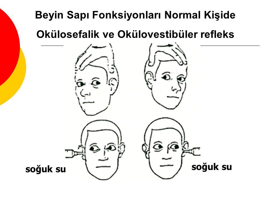 Beyin Sapı Fonksiyonları Normal Kişide