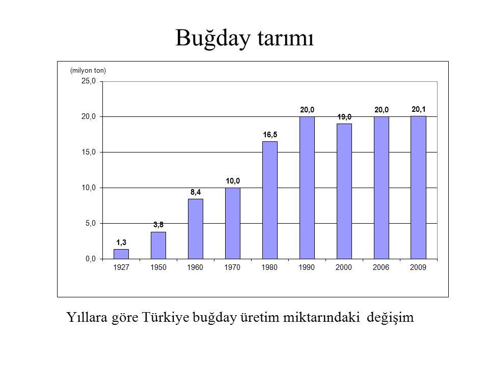 Buğday tarımı Yıllara göre Türkiye buğday üretim miktarındaki değişim