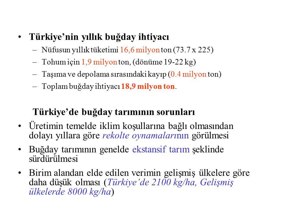 Türkiye'nin yıllık buğday ihtiyacı