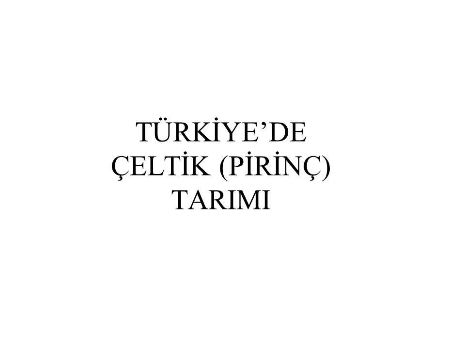 TÜRKİYE'DE ÇELTİK (PİRİNÇ) TARIMI