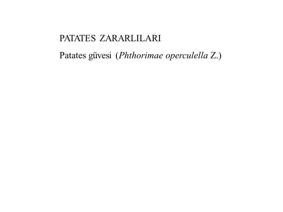 PATATES ZARARLILARI Patates güvesi (Phthorimae operculella Z.)