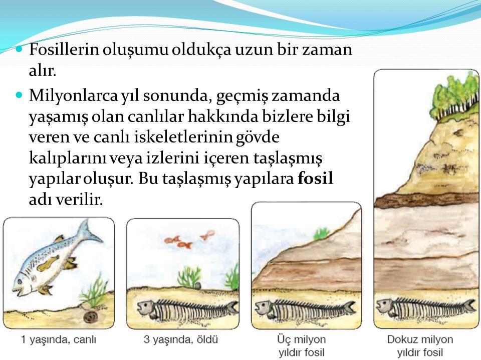 Fosillerin oluşumu oldukça uzun bir zaman alır.