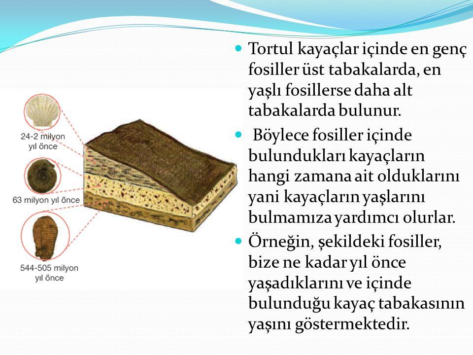 Tortul kayaçlar içinde en genç fosiller üst tabakalarda, en yaşlı fosillerse daha alt tabakalarda bulunur.