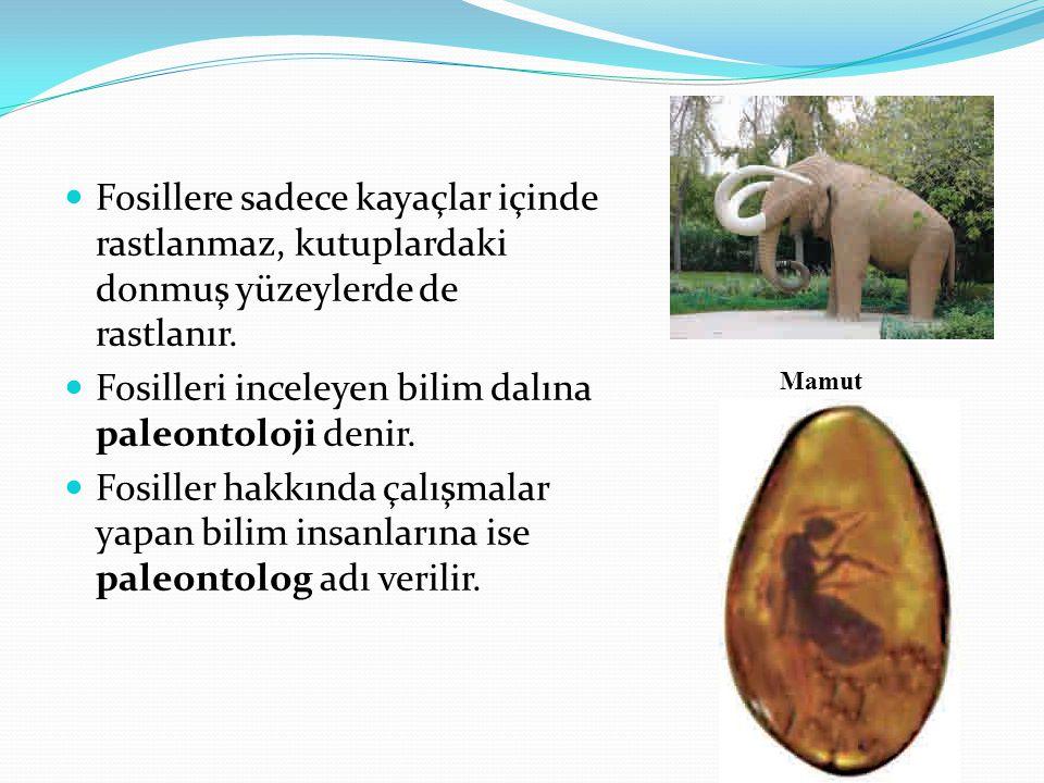 Fosilleri inceleyen bilim dalına paleontoloji denir.