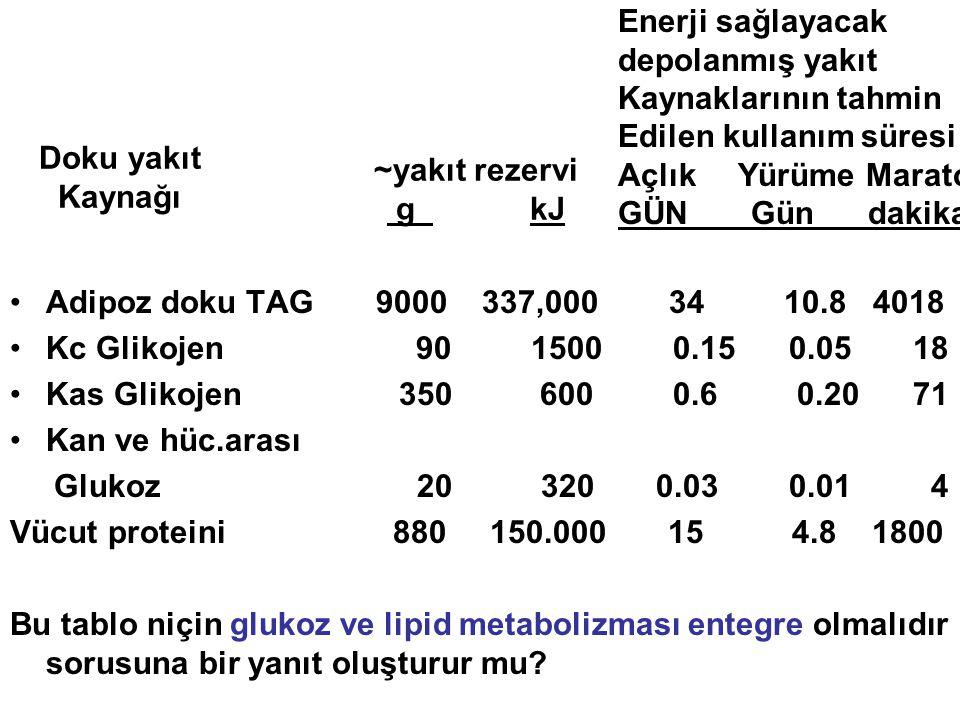 Adipoz doku TAG 9000 337,000 34 10.8 4018 Kc Glikojen 90 1500 0.15 0.05 18.
