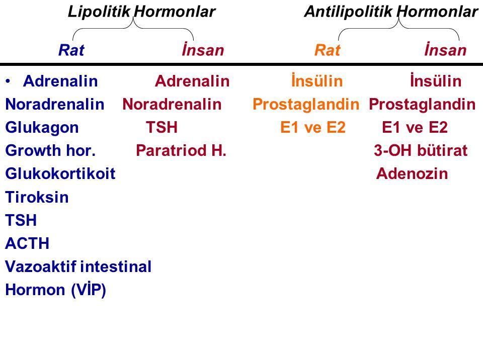 Antilipolitik Hormonlar