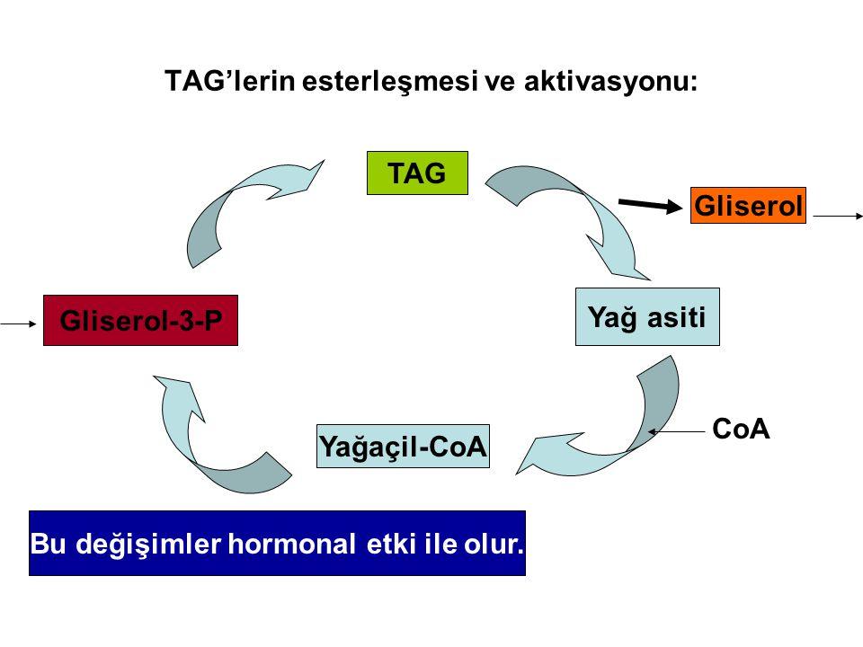 TAG'lerin esterleşmesi ve aktivasyonu:
