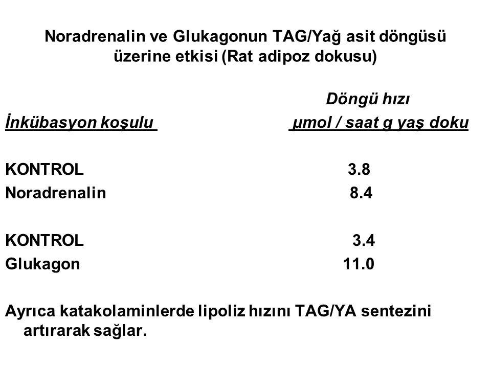 Noradrenalin ve Glukagonun TAG/Yağ asit döngüsü üzerine etkisi (Rat adipoz dokusu)