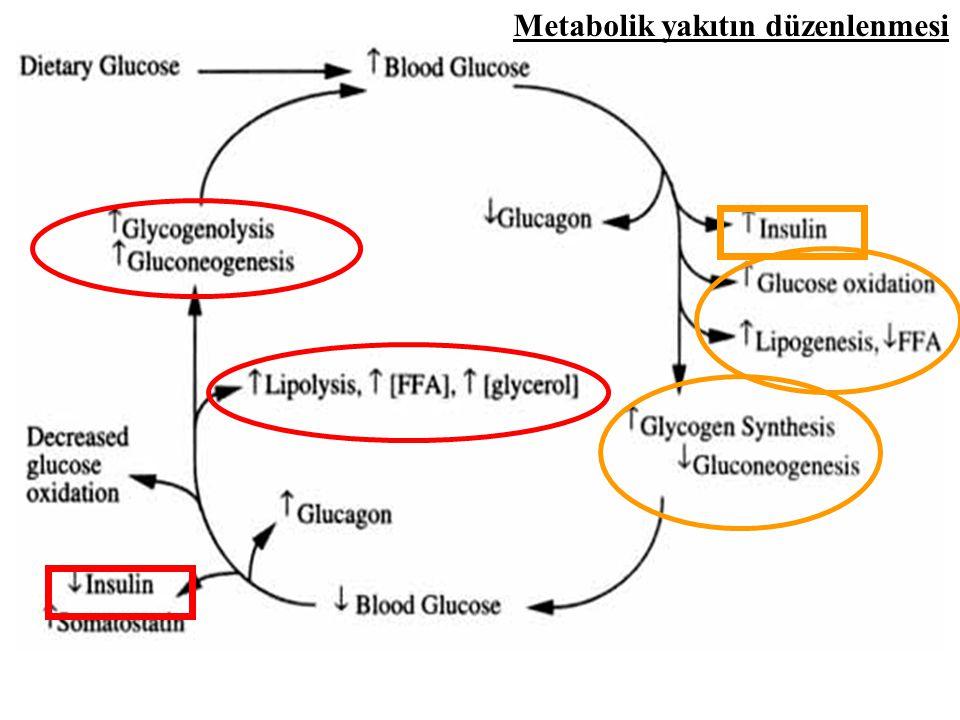 Metabolik yakıtın düzenlenmesi