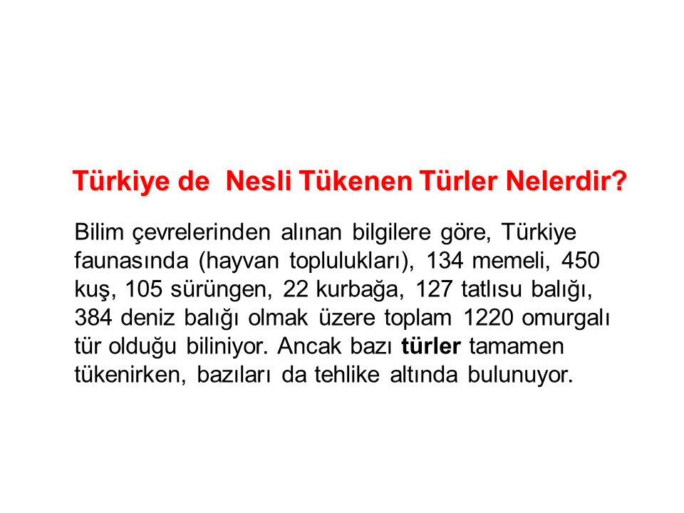 Türkiye de Nesli Tükenen Türler Nelerdir