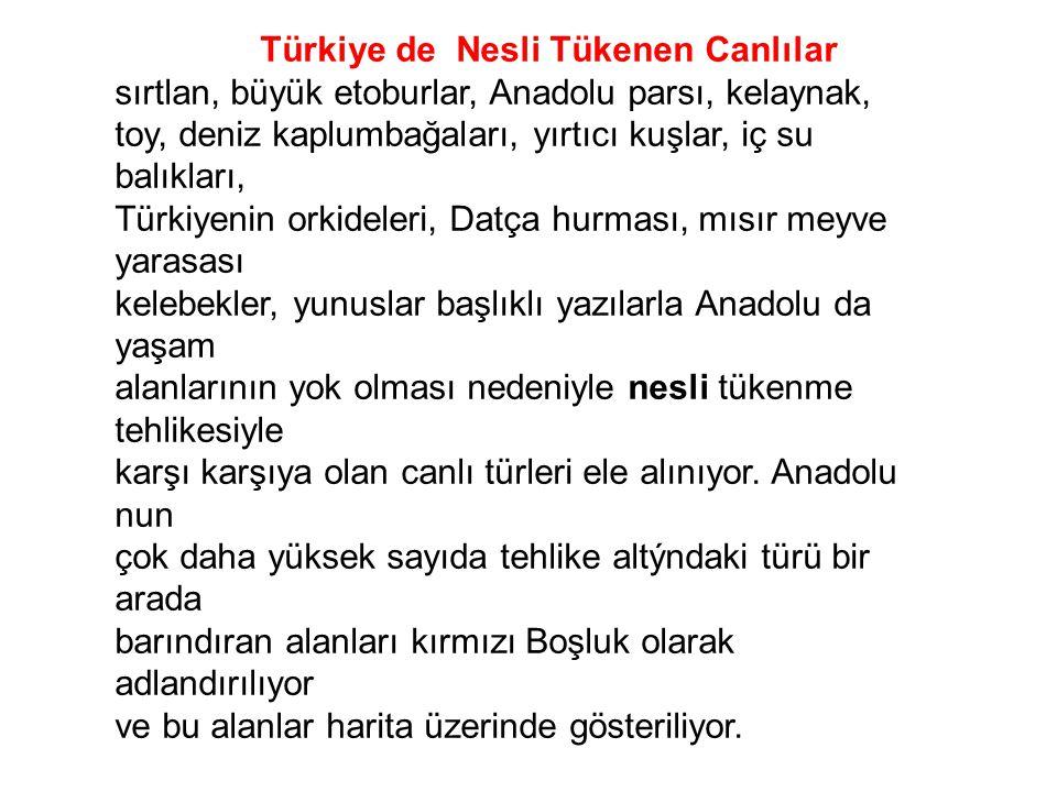 Türkiye de Nesli Tükenen Canlılar