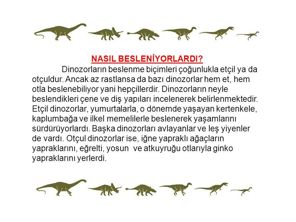 NASIL BESLENİYORLARDI