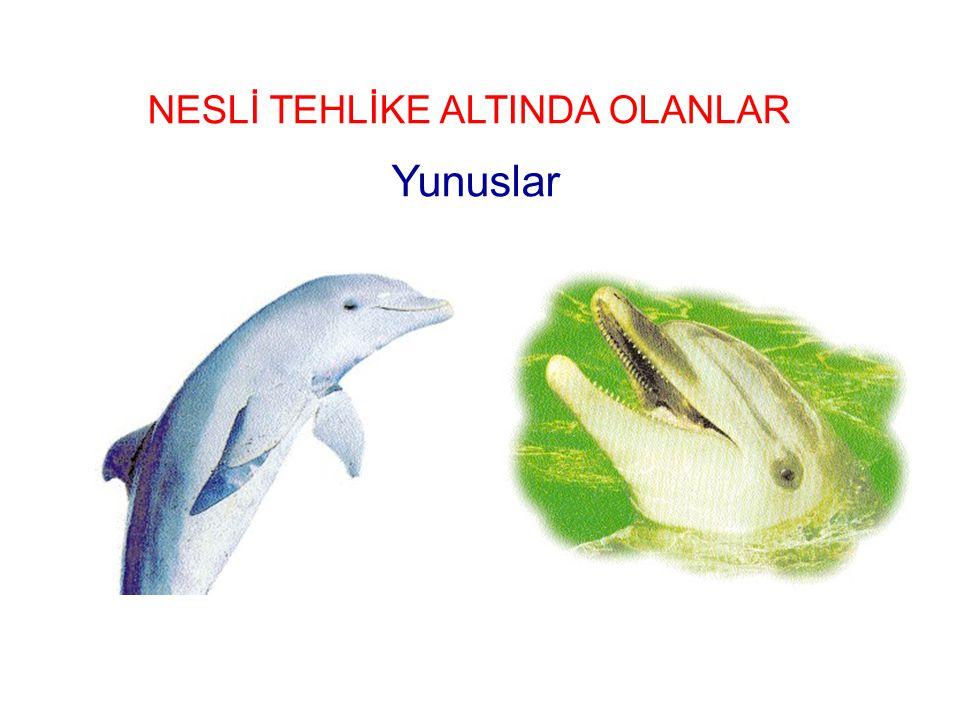 NESLİ TEHLİKE ALTINDA OLANLAR