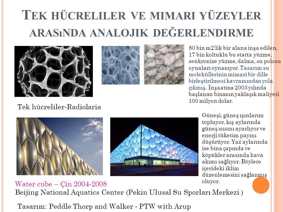 Tek hücreliler ve mimari yüzeyler arasında analojik değerlendirme