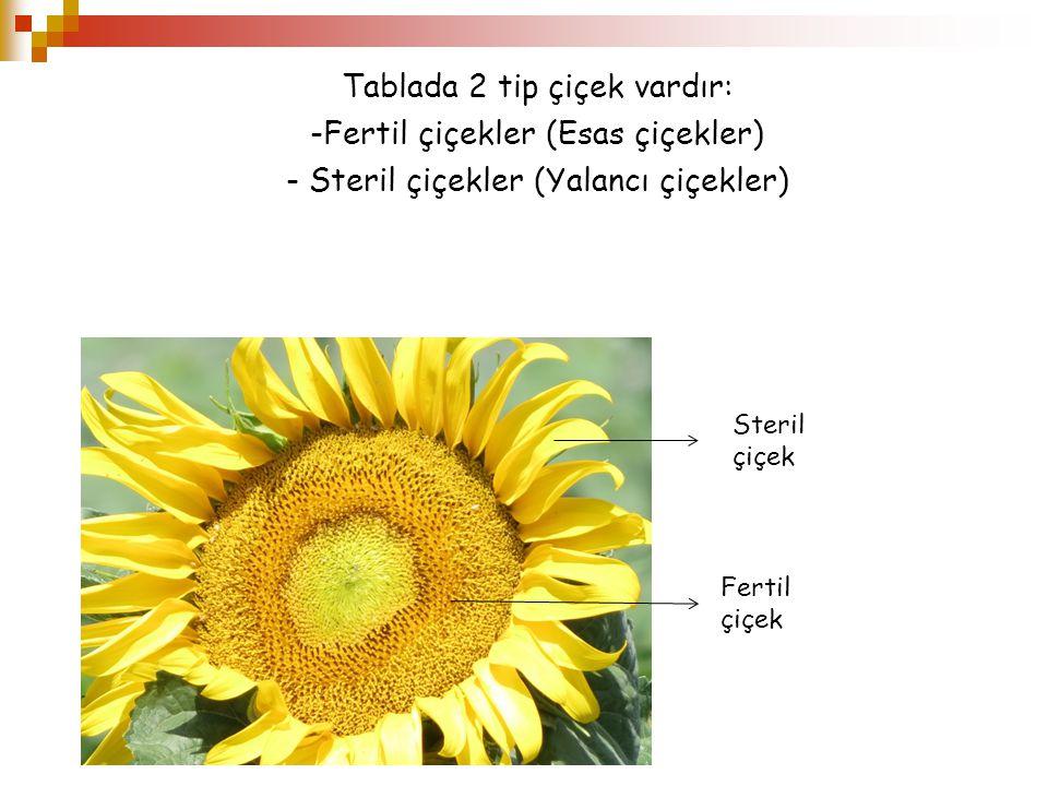Tablada 2 tip çiçek vardır: Fertil çiçekler (Esas çiçekler)