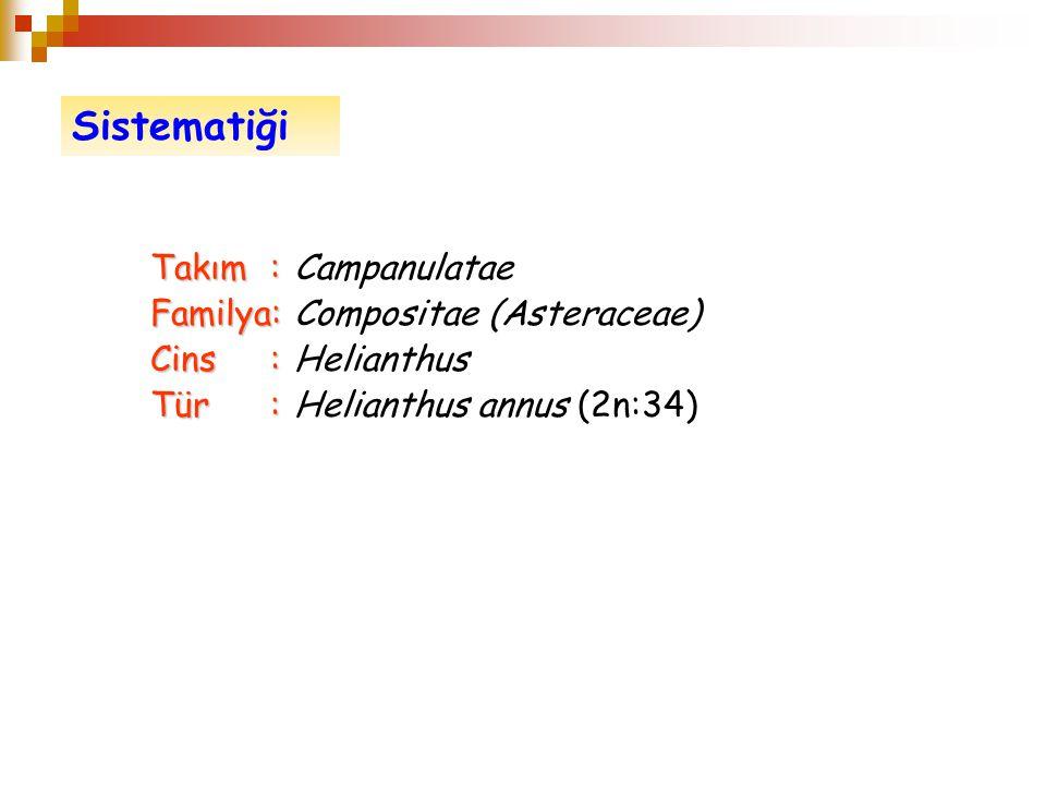 Sistematiği Takım : Campanulatae Familya: Compositae (Asteraceae)