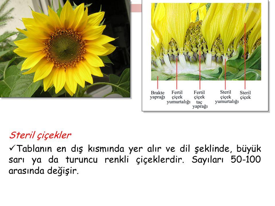 Steril çiçekler Tablanın en dış kısmında yer alır ve dil şeklinde, büyük sarı ya da turuncu renkli çiçeklerdir.