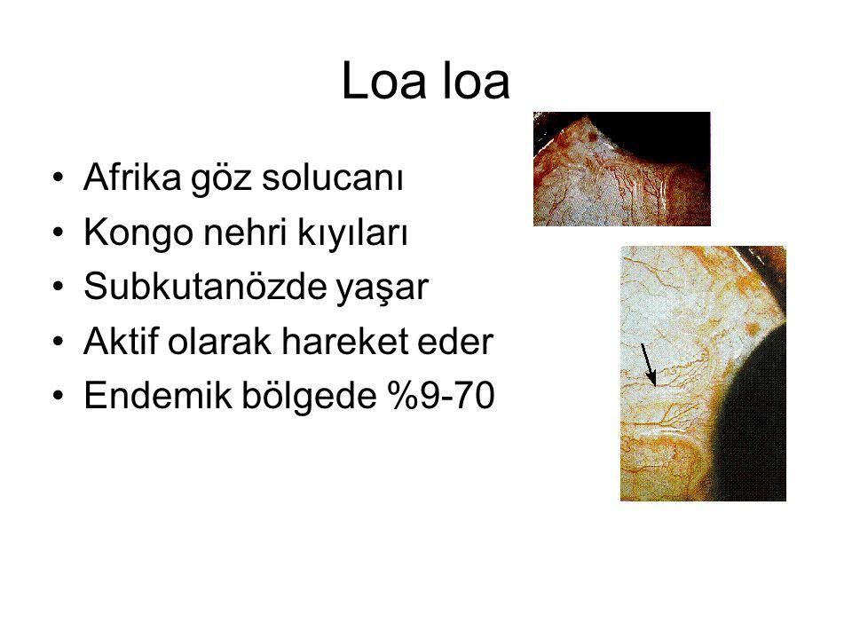 Loa loa Afrika göz solucanı Kongo nehri kıyıları Subkutanözde yaşar