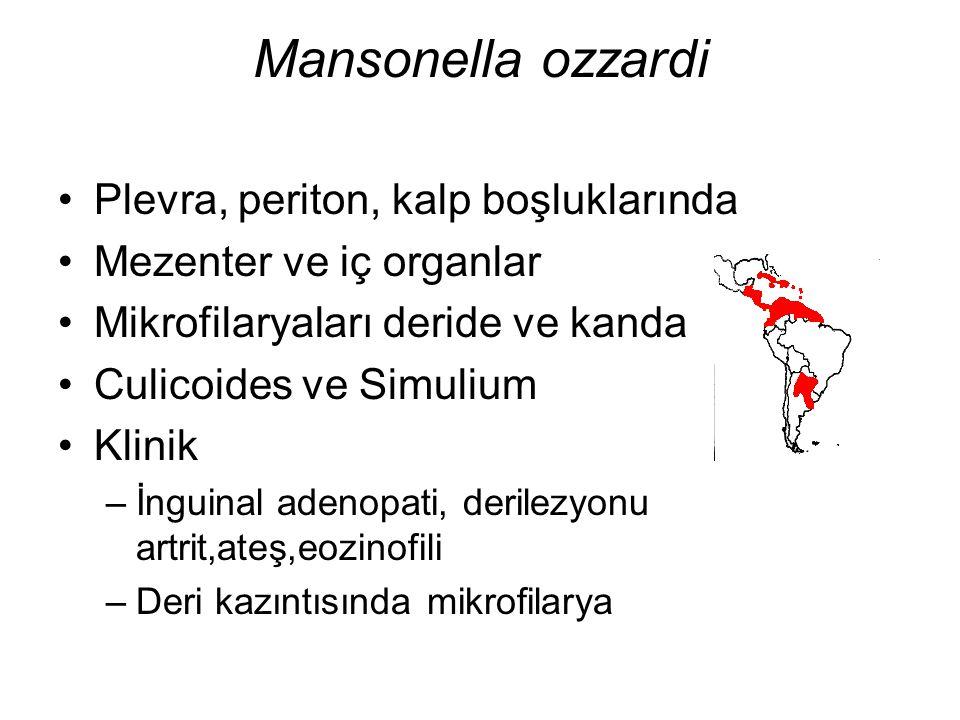 Mansonella ozzardi Plevra, periton, kalp boşluklarında