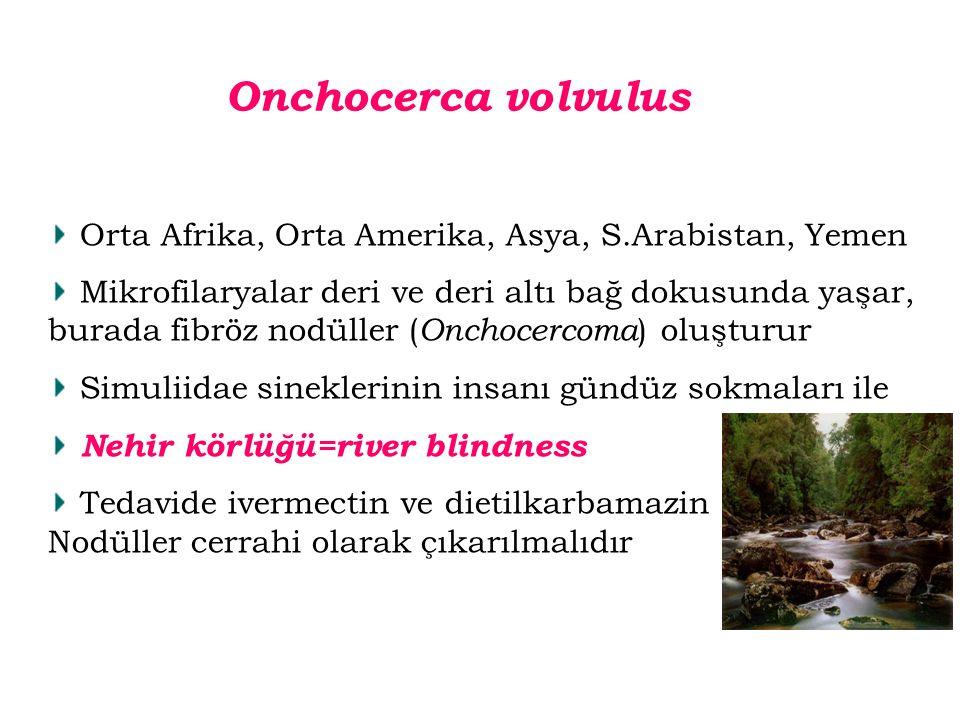Onchocerca volvulus Orta Afrika, Orta Amerika, Asya, S.Arabistan, Yemen.
