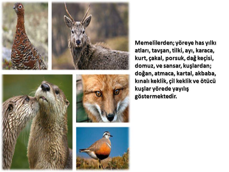 Memelilerden; yöreye has yılkı atları, tavşan, tilki, ayı, karaca, kurt, çakal, porsuk, dağ keçisi, domuz, ve sansar, kuşlardan; doğan, atmaca, kartal, akbaba, kınalı keklik, çil keklik ve ötücü kuşlar yörede yayılış göstermektedir.