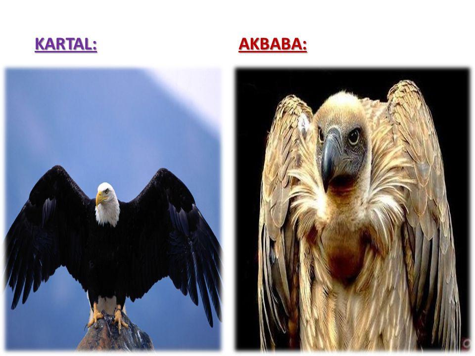 KARTAL: AKBABA: